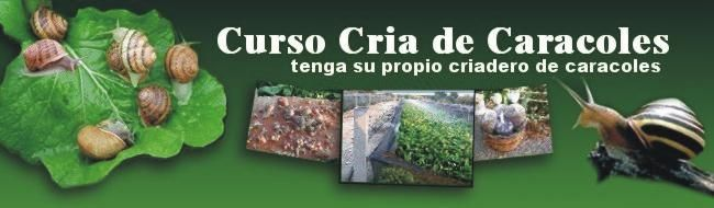 Manual Helicicultura Cria De Caracoles Ilustrado Gane $$$
