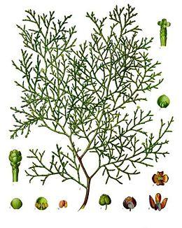 Enciclopedia de las plantas medicinales